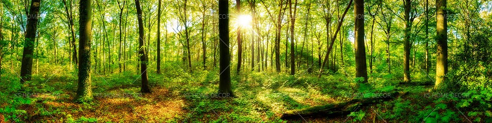 Forest Panorama With Sun 69754331 Customize Wallpaper